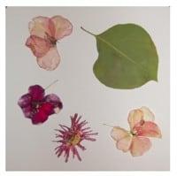 כרטיסי ברכה עם פרחים מיובשים